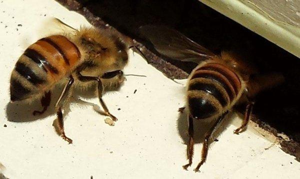 Skoks Raw Honey